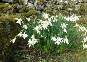 Spring 2012 in Littondale